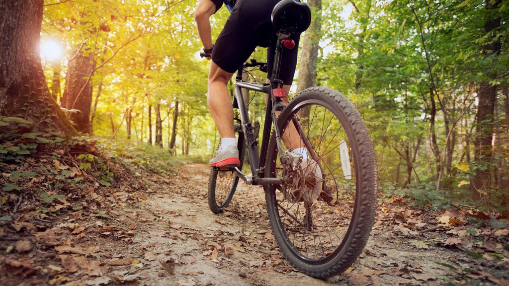 mountain bike in sunny forest